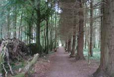 Mote Park Heritage Walkway